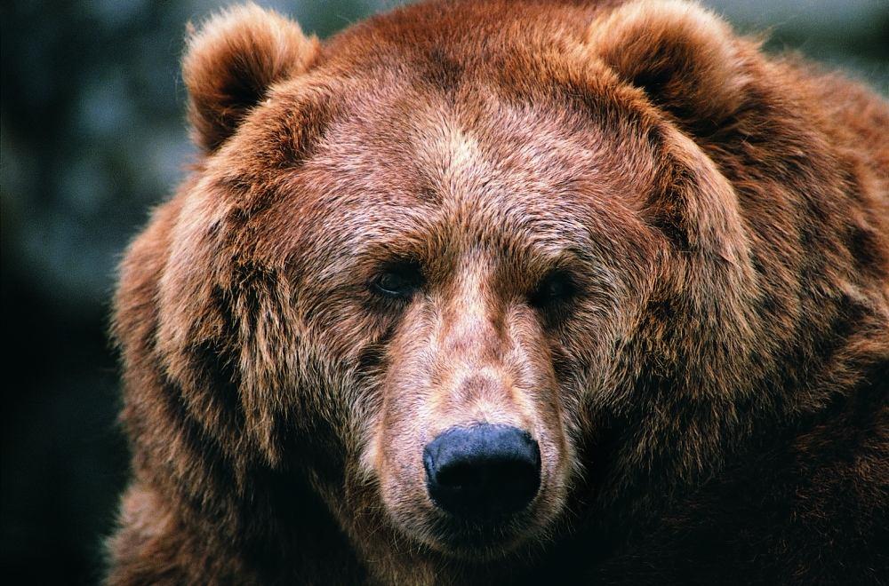 活熊取胆,何其血腥!