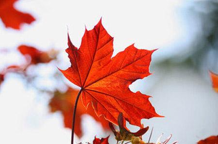 加拿大大学的A-Level入学要求 A-Level成绩申请加拿大大学 加拿大大学专业A-Level标准 加拿大教育中心