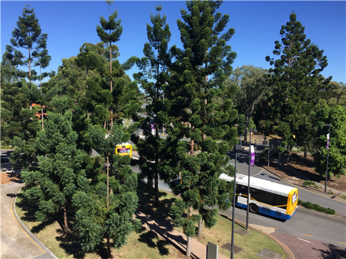 昆士兰大学直播 昆大减免申请费 艾迪留学昆士兰大学