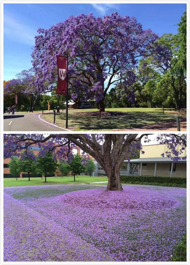 西悉尼大学,澳洲大学,艾迪澳洲名校行,艾迪探校记